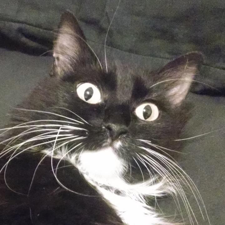 Very surprised looking cat